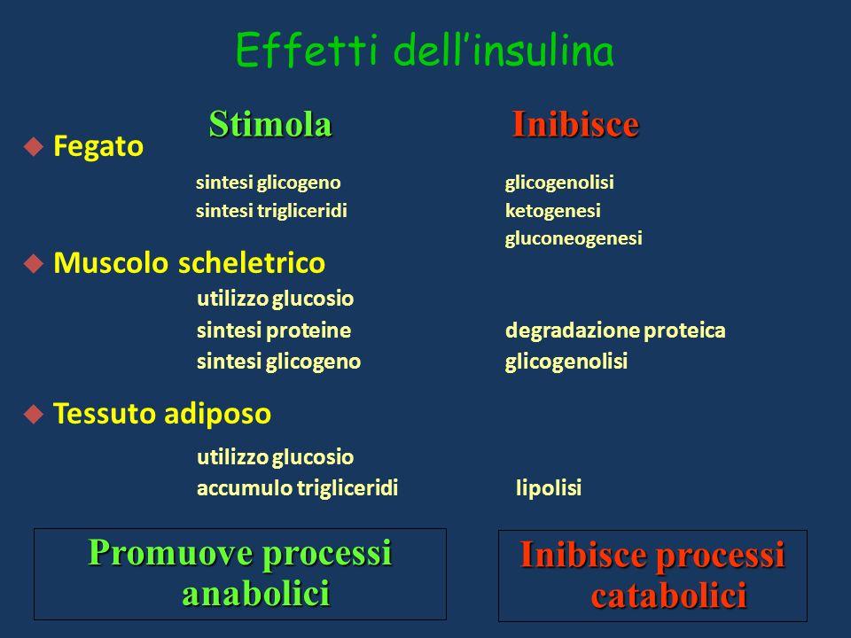 Effetti dell'insulina
