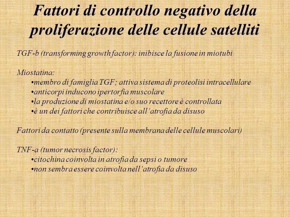 Fattori di controllo negativo della proliferazione delle cellule satelliti