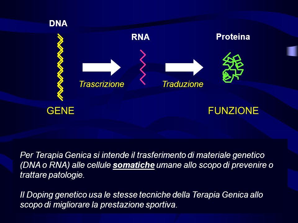 GENE FUNZIONE DNA RNA Proteina Trascrizione Traduzione