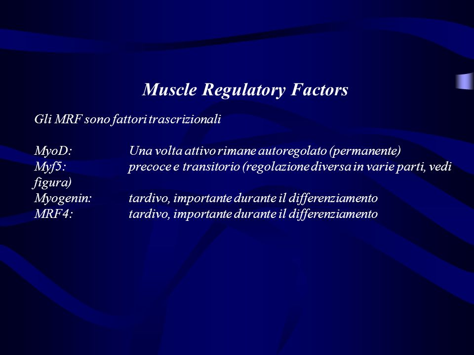 Muscle Regulatory Factors