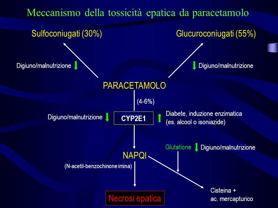 (N-acetil-benzochinone imina)