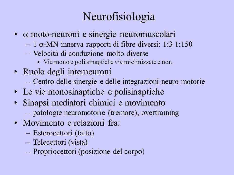 Neurofisiologia  moto-neuroni e sinergie neuromuscolari