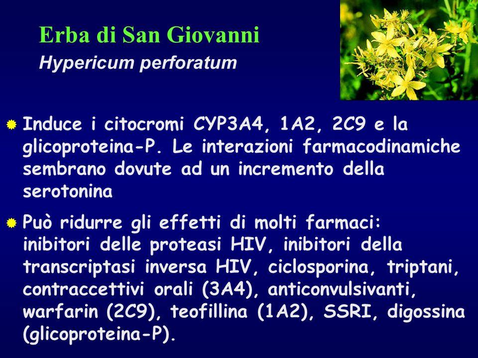 Erba di San Giovanni Hypericum perforatum