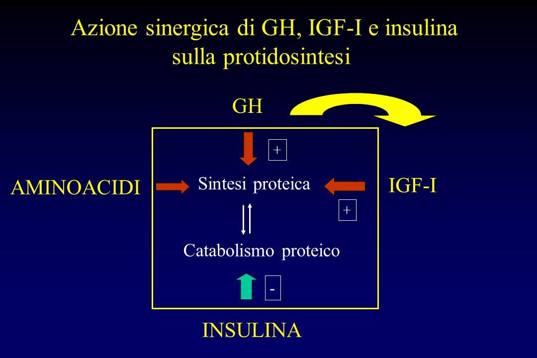 Azione sinergica di GH, IGF-I e insulina sulla protidosintesi