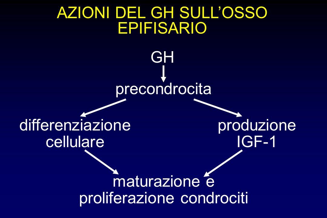AZIONI DEL GH SULL'OSSO EPIFISARIO
