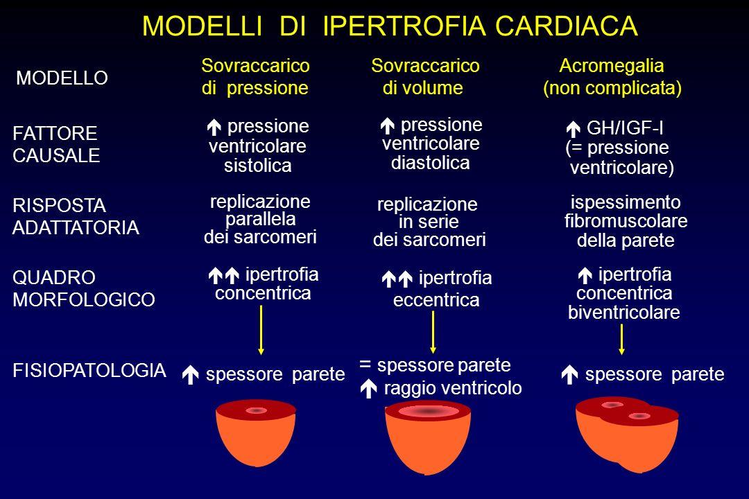 MODELLI DI IPERTROFIA CARDIACA