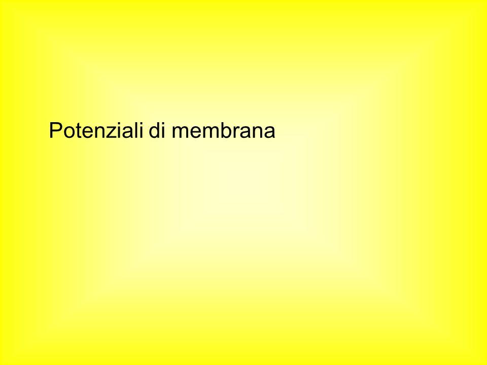Potenziali di membrana