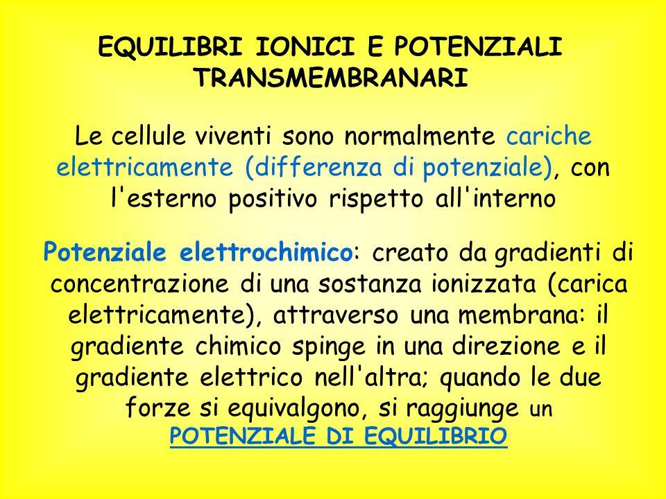 EQUILIBRI IONICI E POTENZIALI TRANSMEMBRANARI POTENZIALE DI EQUILIBRIO