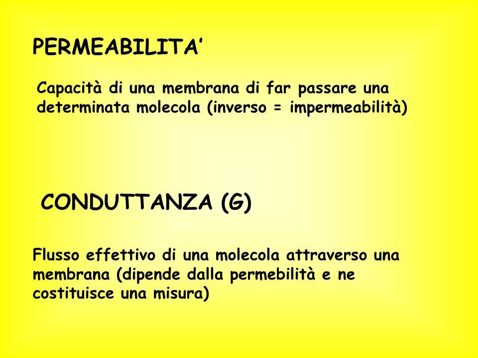 PERMEABILITA' CONDUTTANZA (G)
