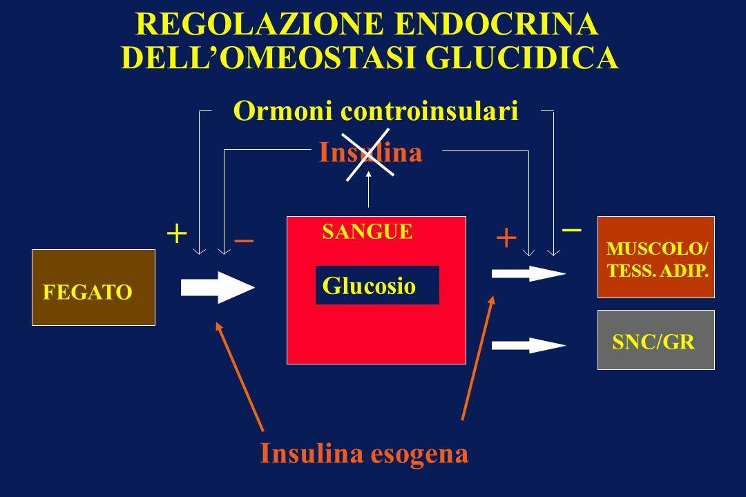 REGOLAZIONE ENDOCRINA DELL'OMEOSTASI GLUCIDICA Ormoni controinsulari