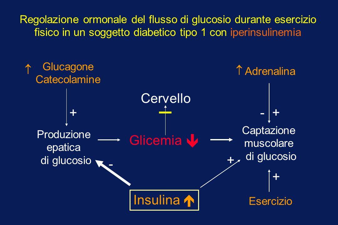  Cervello + - + Insulina  + - Glicemia +