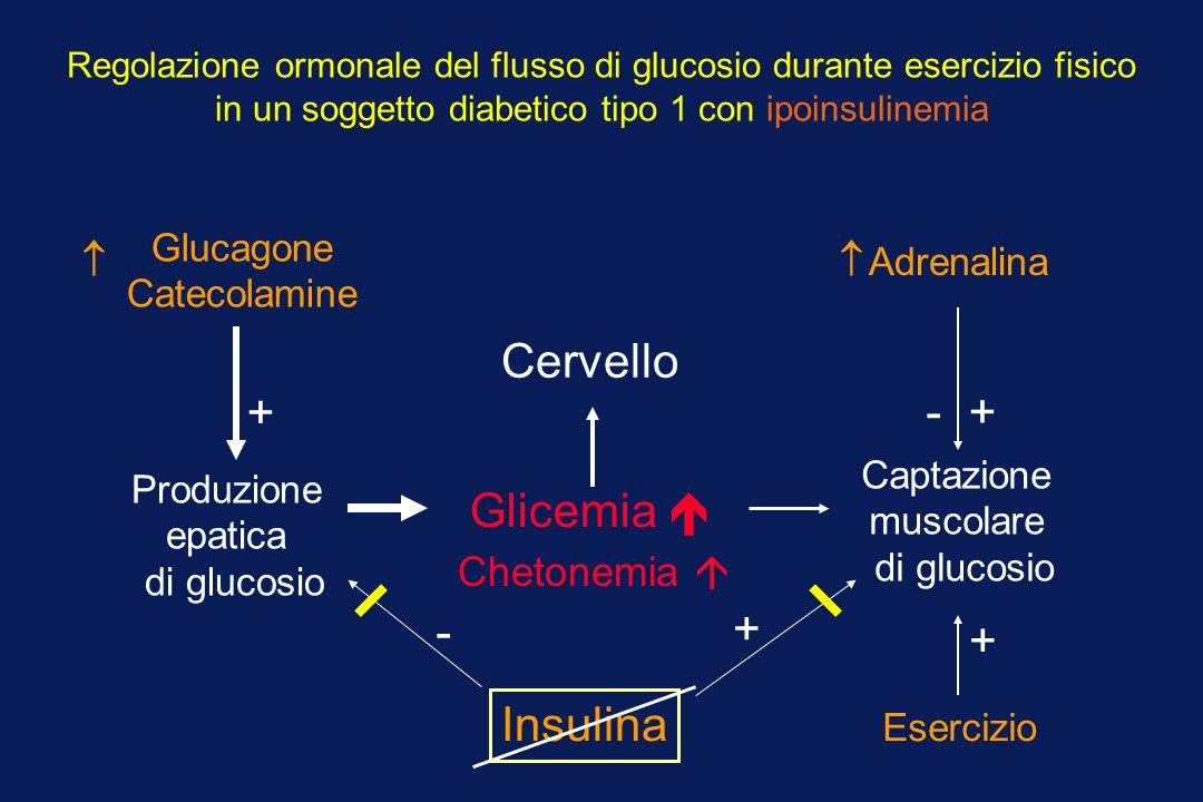 Cervello + - + Glicemia  - + + Insulina Chetonemia  Glucagone