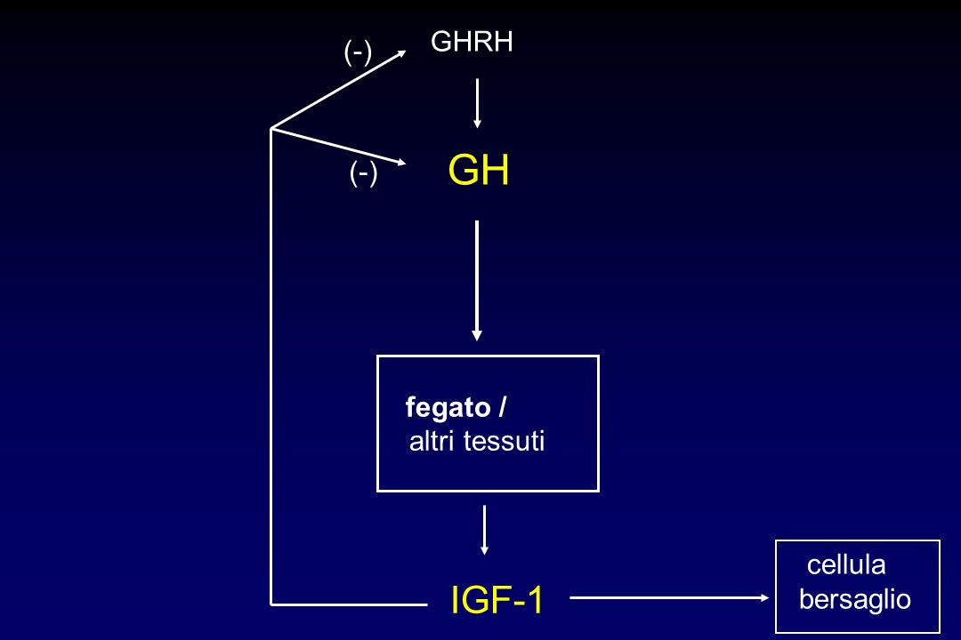 GHRH (-) GH (-) fegato / altri tessuti cellula bersaglio IGF-1