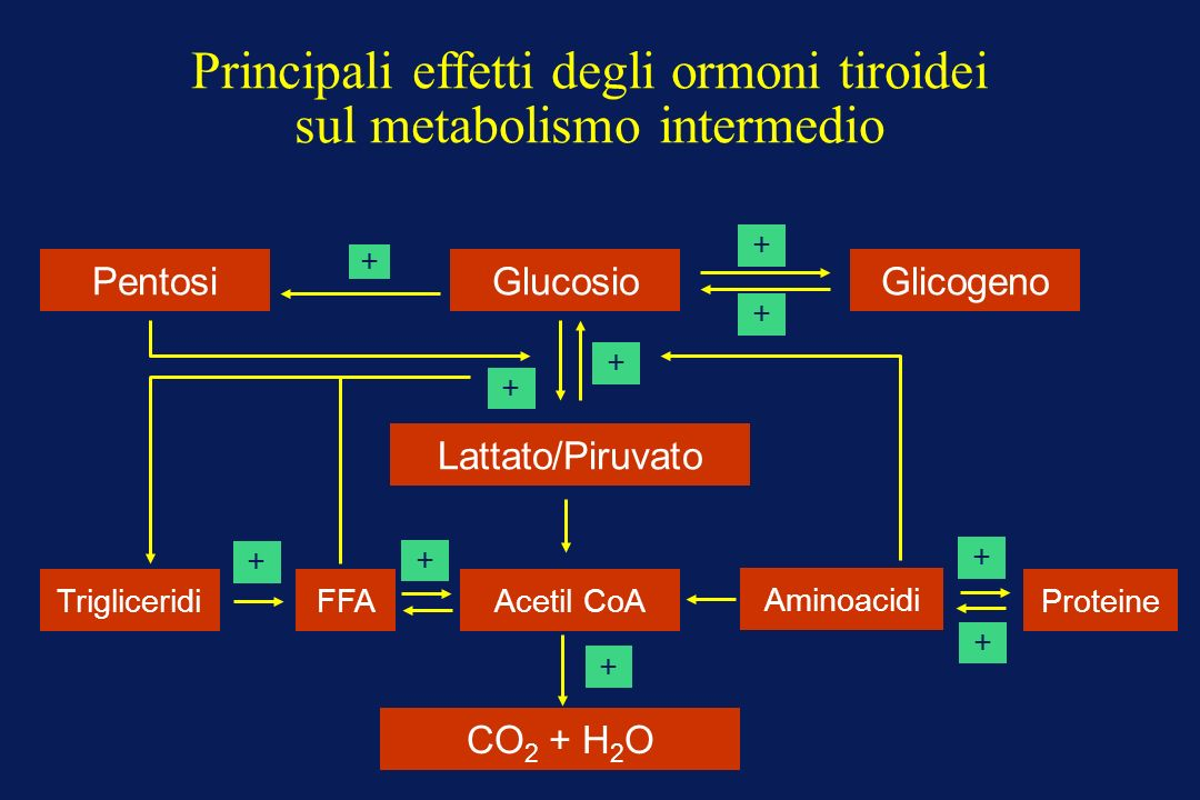 Principali effetti degli ormoni tiroidei sul metabolismo intermedio