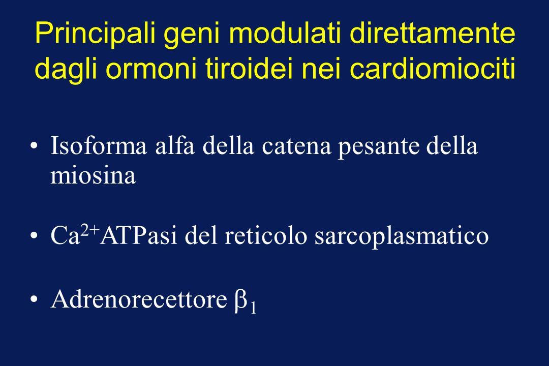 Principali geni modulati direttamente dagli ormoni tiroidei nei cardiomiociti