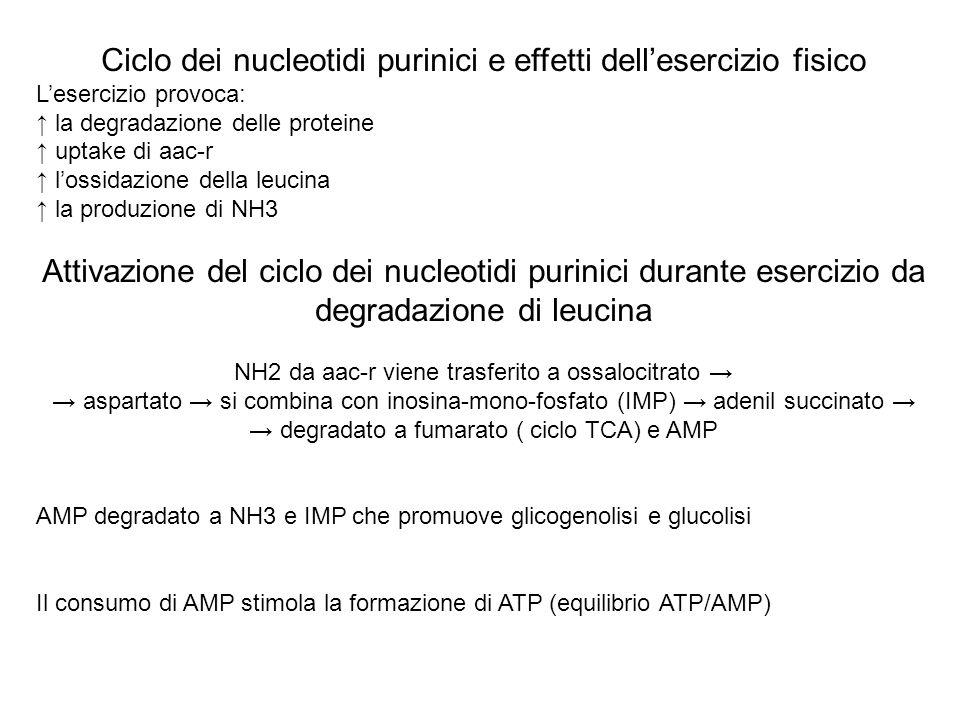 Ciclo dei nucleotidi purinici e effetti dell'esercizio fisico