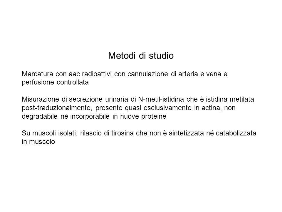 Metodi di studioMarcatura con aac radioattivi con cannulazione di arteria e vena e perfusione controllata.
