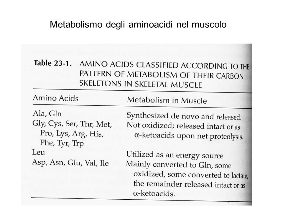 Metabolismo degli aminoacidi nel muscolo