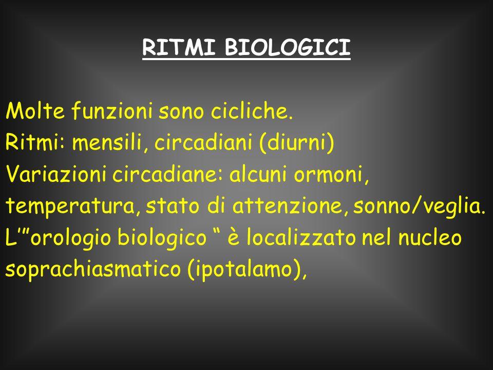 RITMI BIOLOGICI Molte funzioni sono cicliche. Ritmi: mensili, circadiani (diurni)