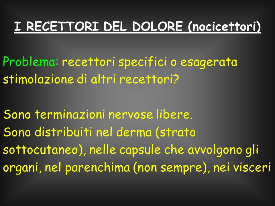 I RECETTORI DEL DOLORE (nocicettori)