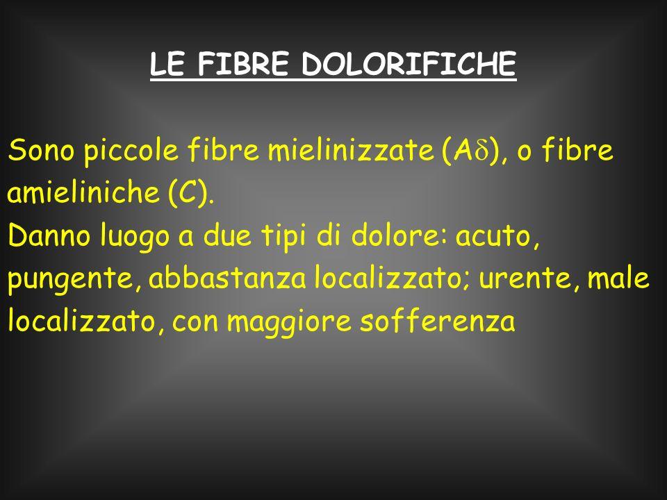 LE FIBRE DOLORIFICHE Sono piccole fibre mielinizzate (Ad), o fibre amieliniche (C).