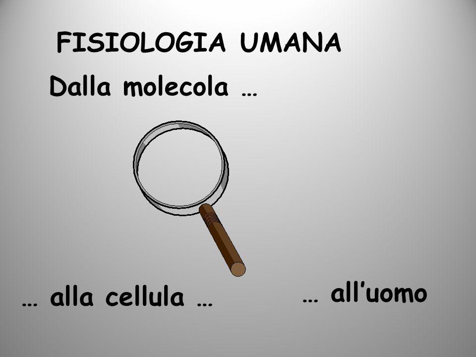 FISIOLOGIA UMANA Dalla molecola … … all'uomo … alla cellula …