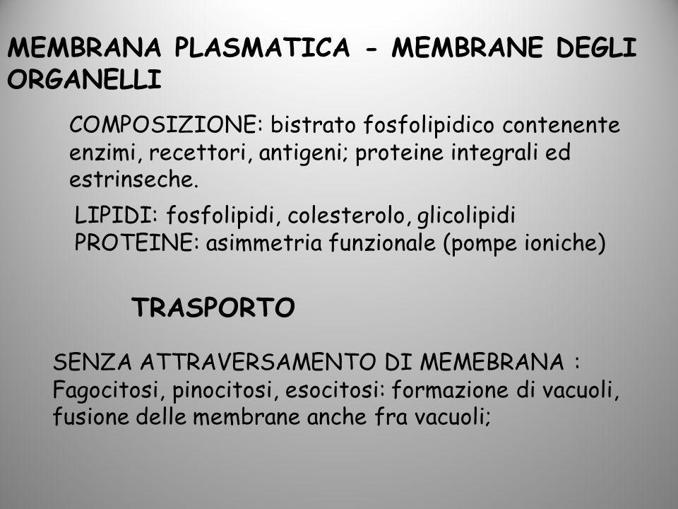 MEMBRANA PLASMATICA - MEMBRANE DEGLI ORGANELLI