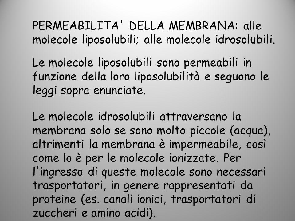 PERMEABILITA DELLA MEMBRANA: alle molecole liposolubili; alle molecole idrosolubili.