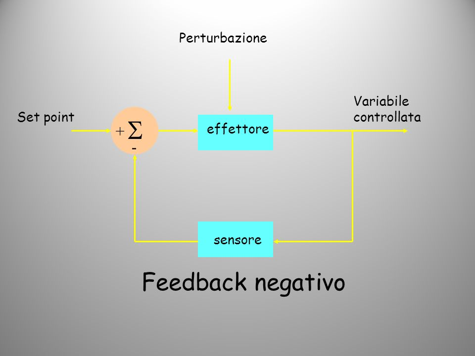  Feedback negativo + - Perturbazione Variabile controllata Set point