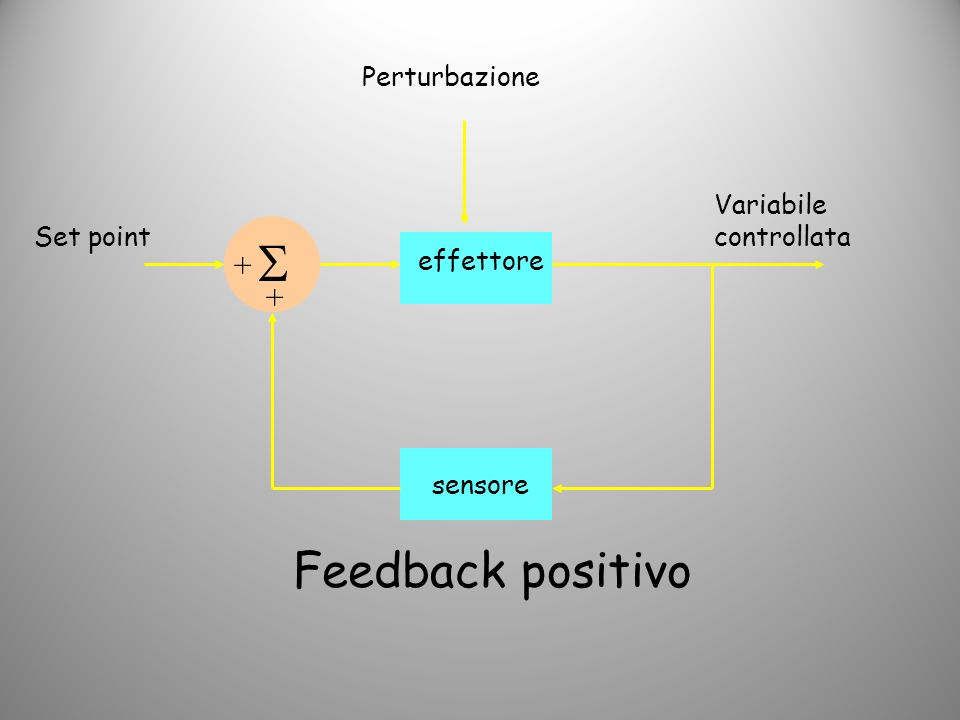  Feedback positivo + + Perturbazione Variabile controllata Set point