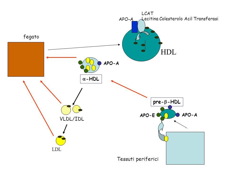 HDL fegato a-HDL pre-b-HDL VLDL/IDL LDL Tessuti periferici LCAT