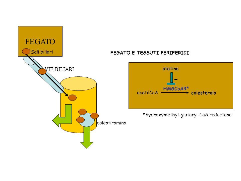 FEGATO - VIE BILIARI Sali biliari colestiramina acetilCoA colesterolo