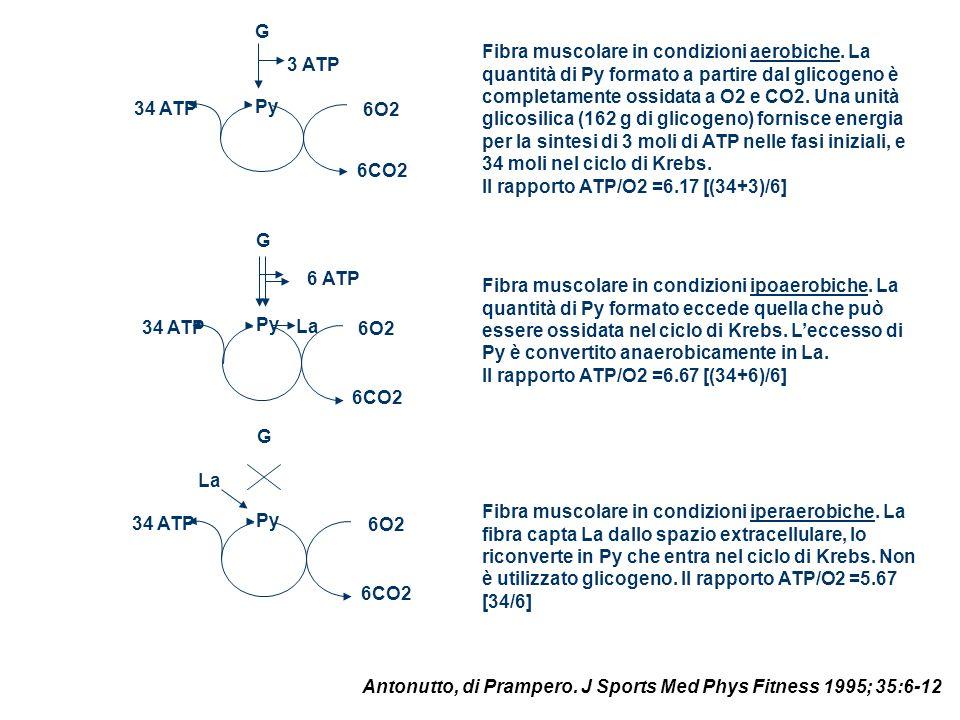 Py 6O2. 6CO2. G. 34 ATP. 3 ATP.