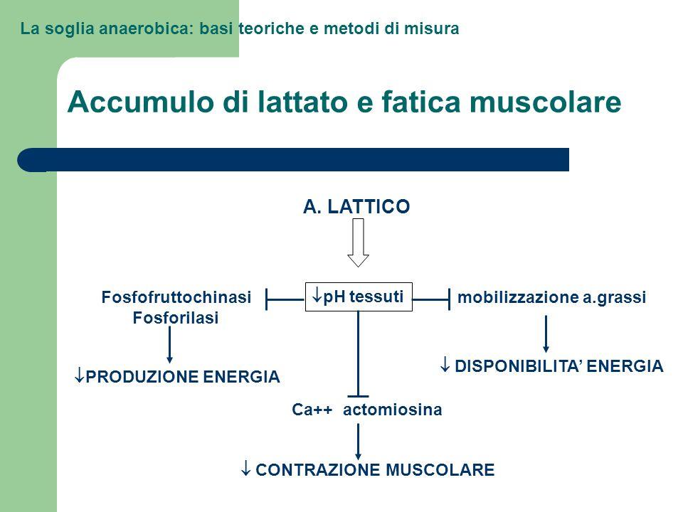 Accumulo di lattato e fatica muscolare