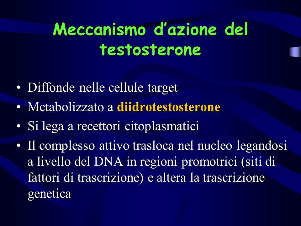 Meccanismo d'azione del testosterone