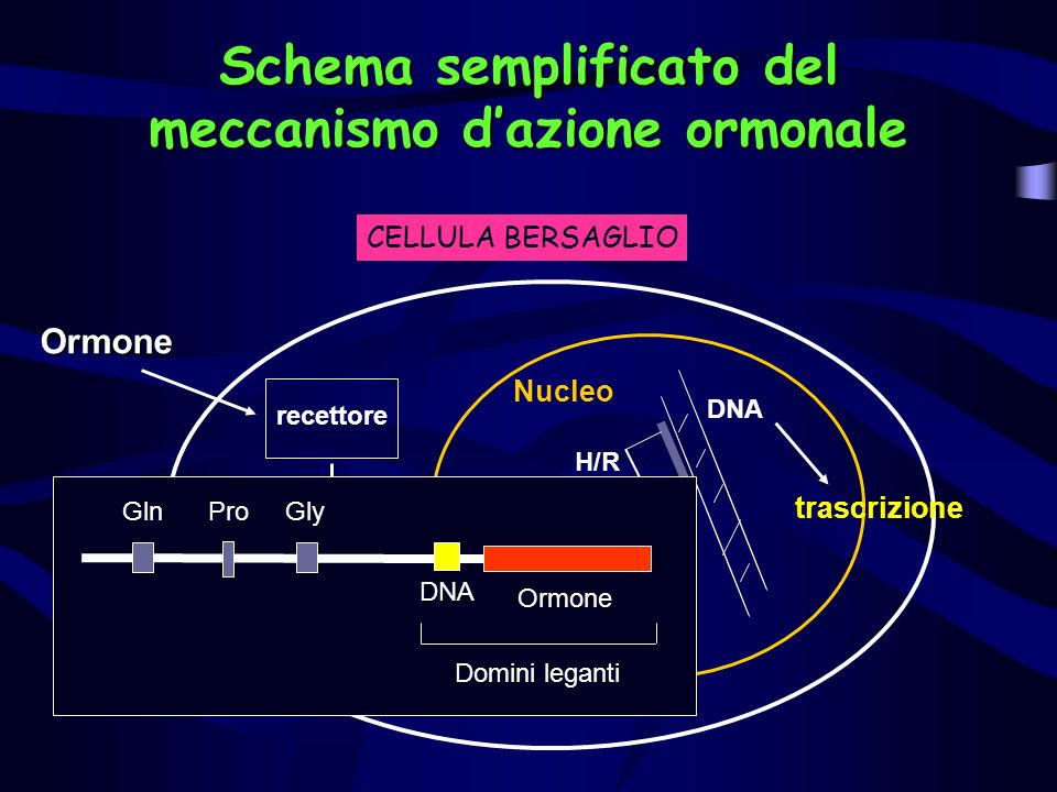 Schema semplificato del meccanismo d'azione ormonale