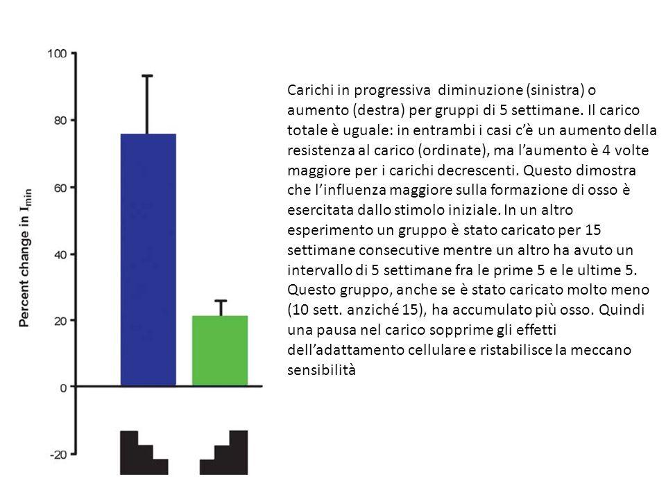 Carichi in progressiva diminuzione (sinistra) o aumento (destra) per gruppi di 5 settimane.