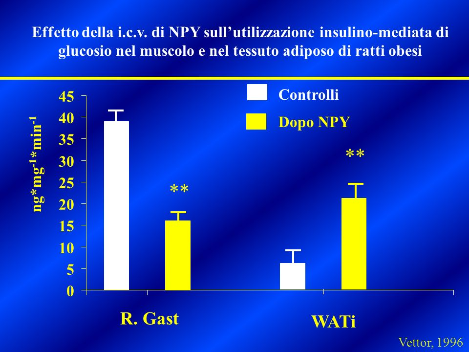 Effetto della i.c.v. di NPY sull'utilizzazione insulino-mediata di glucosio nel muscolo e nel tessuto adiposo di ratti obesi