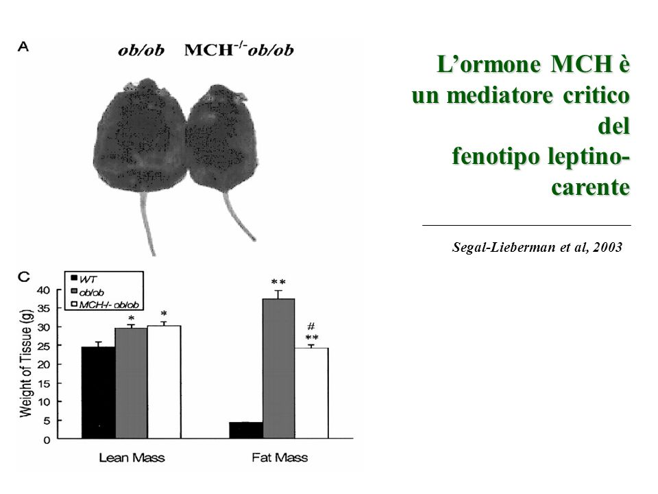 L'ormone MCH è un mediatore critico del