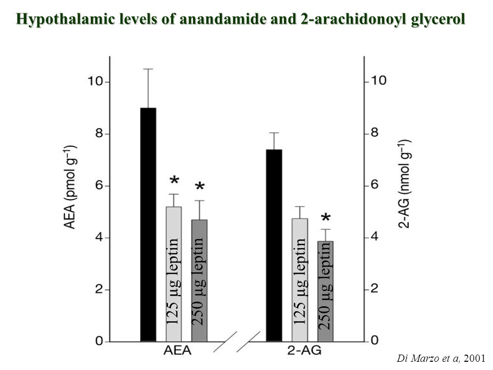 Hypothalamic levels of anandamide and 2-arachidonoyl glycerol