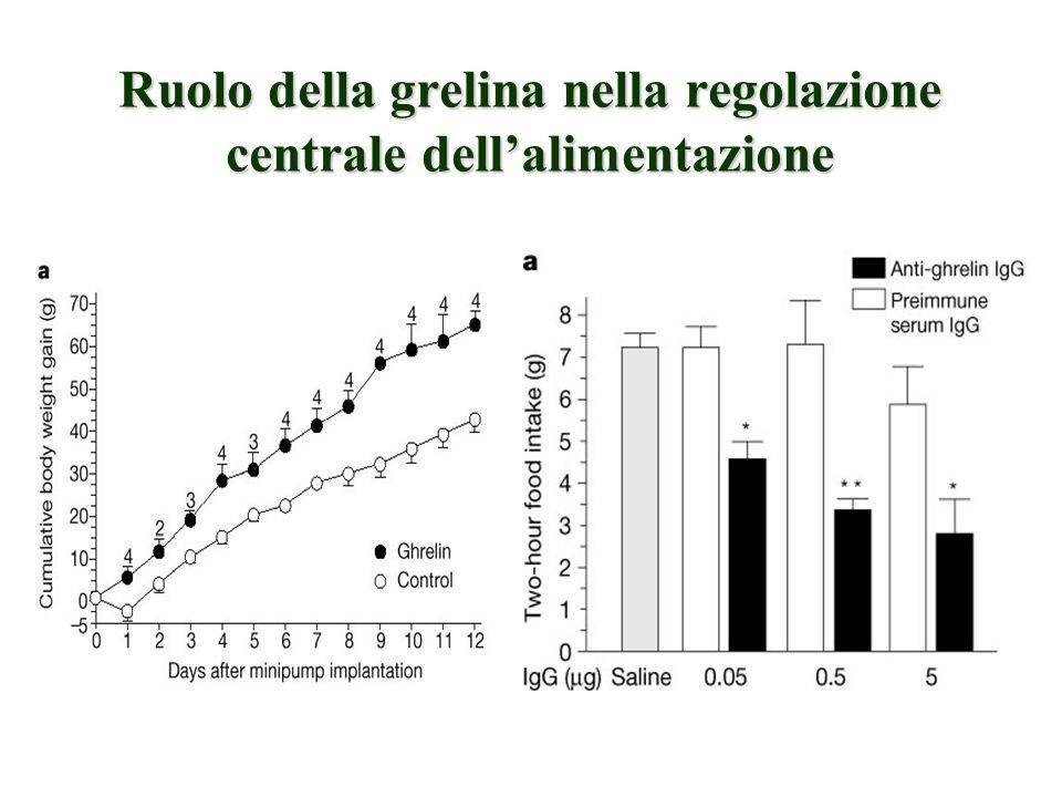 Ruolo della grelina nella regolazione centrale dell'alimentazione
