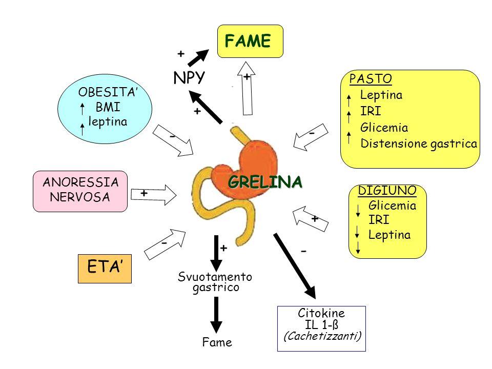 FAME + + NPY + - - GRELINA + + - + - ETA' PASTO Leptina OBESITA' IRI