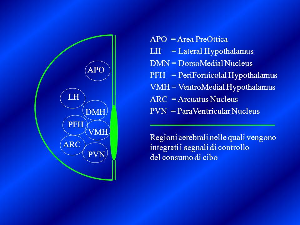 APO = Area PreOttica LH = Lateral Hypothalamus. DMN = DorsoMedial Nucleus. PFH = PeriFornicolal Hypothalamus.