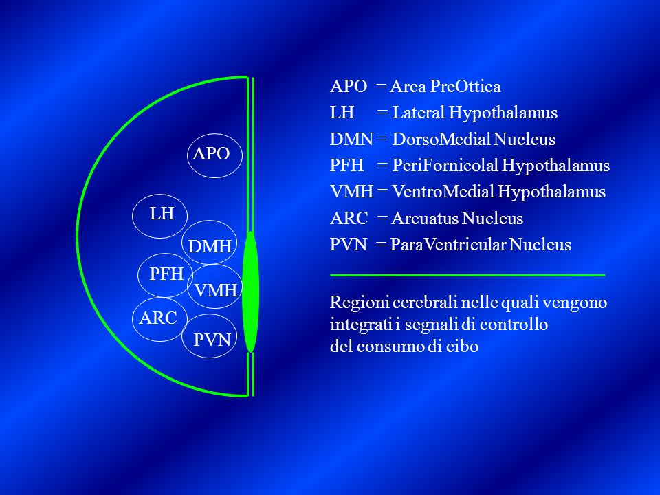 APO = Area PreOtticaLH = Lateral Hypothalamus. DMN = DorsoMedial Nucleus. PFH = PeriFornicolal Hypothalamus.