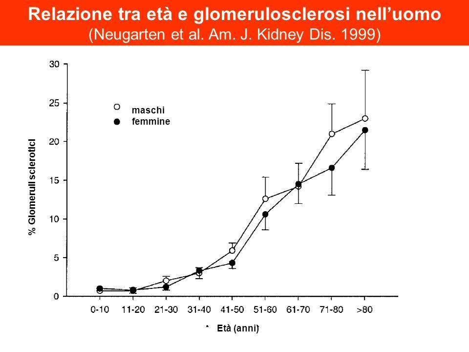 Relazione tra età e glomerulosclerosi nell'uomo