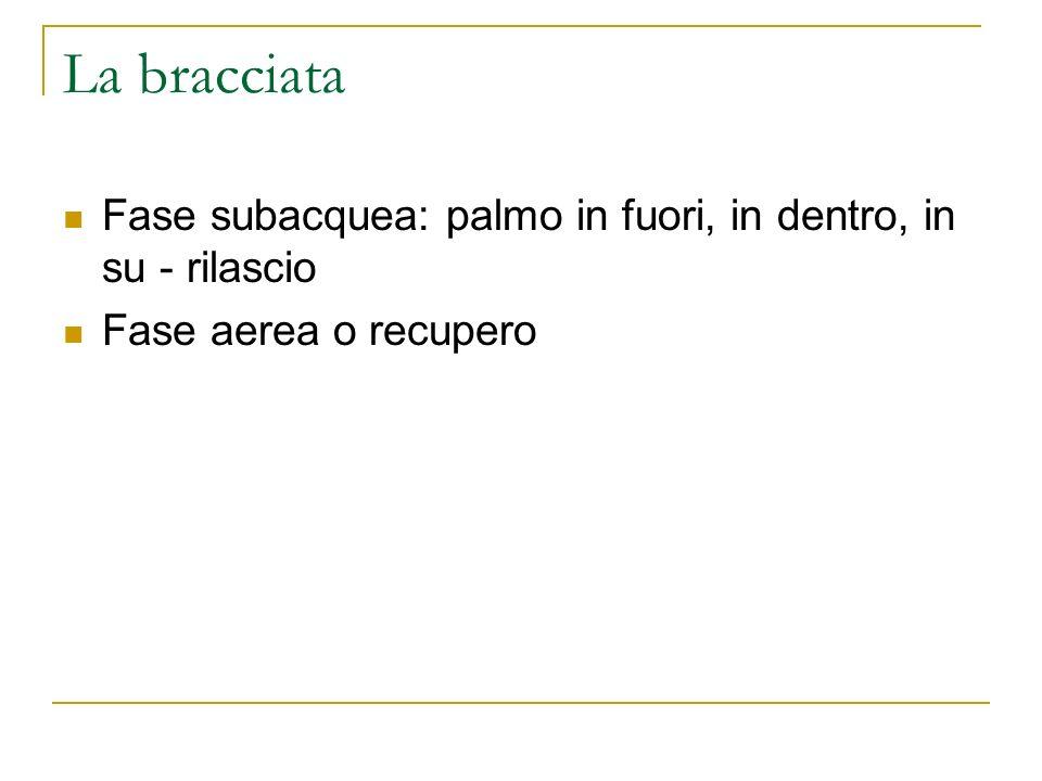 La bracciata Fase subacquea: palmo in fuori, in dentro, in su - rilascio Fase aerea o recupero