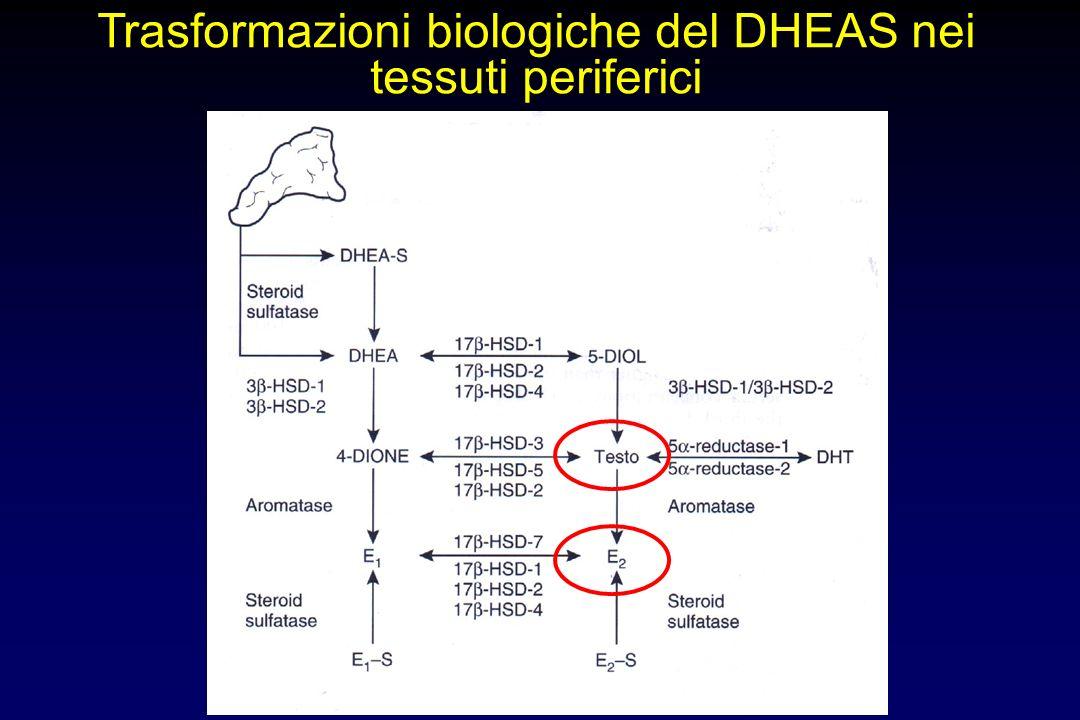 Trasformazioni biologiche del DHEAS nei tessuti periferici