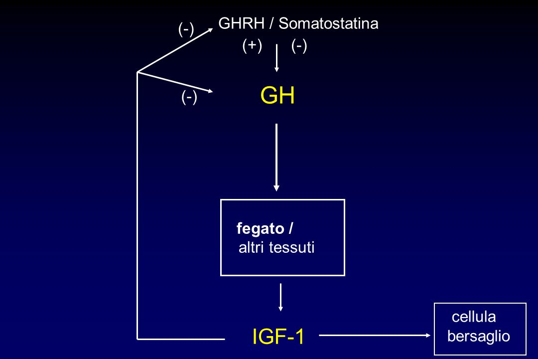 GH IGF-1 GHRH / Somatostatina (-) (+) (-) altri tessuti cellula