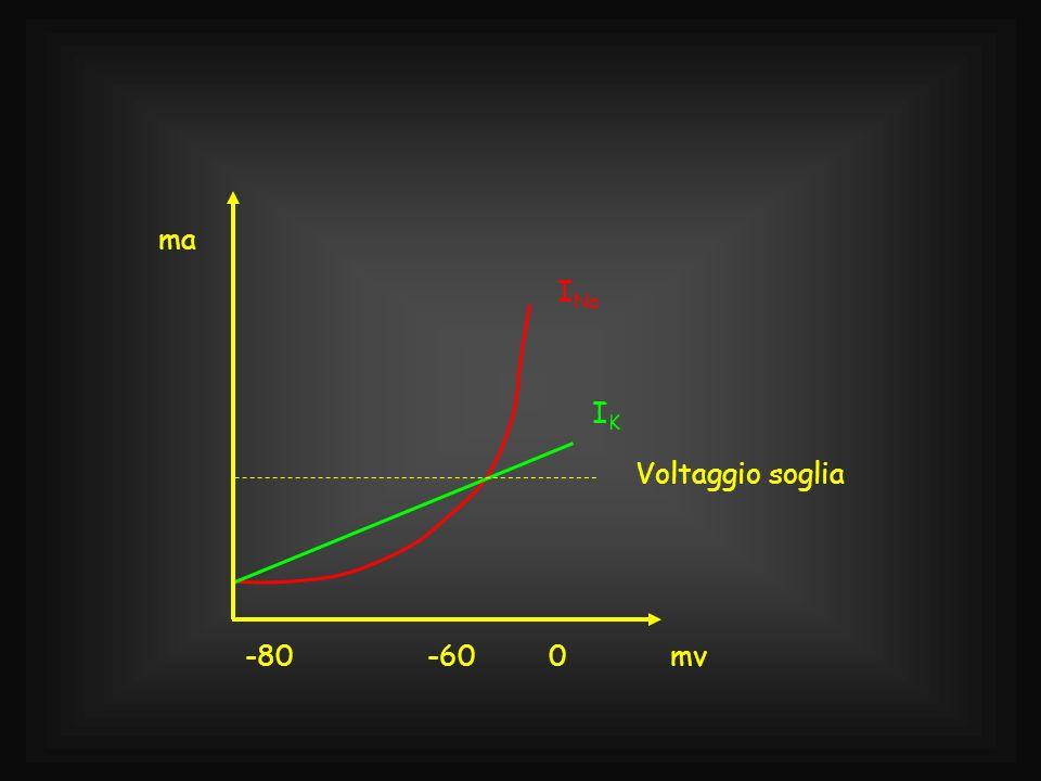 -60 -80 mv ma INa IK Voltaggio soglia