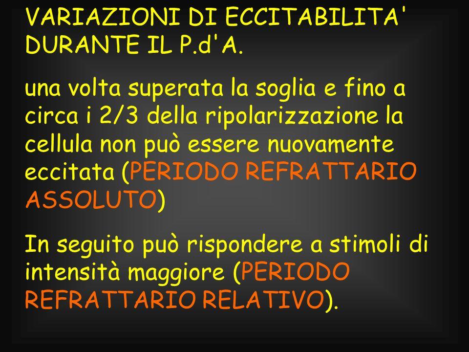 VARIAZIONI DI ECCITABILITA DURANTE IL P.d A.